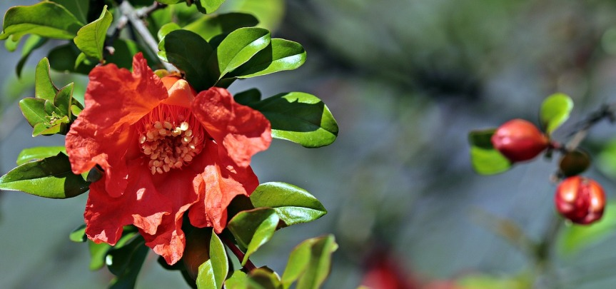 camellia-2399688_1280