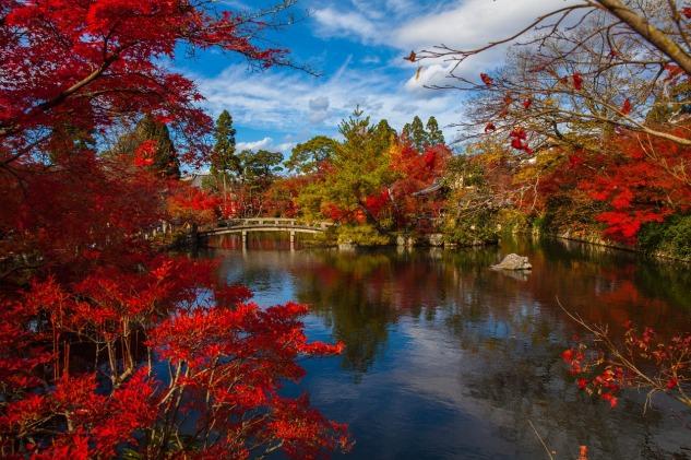 jardin zen automne