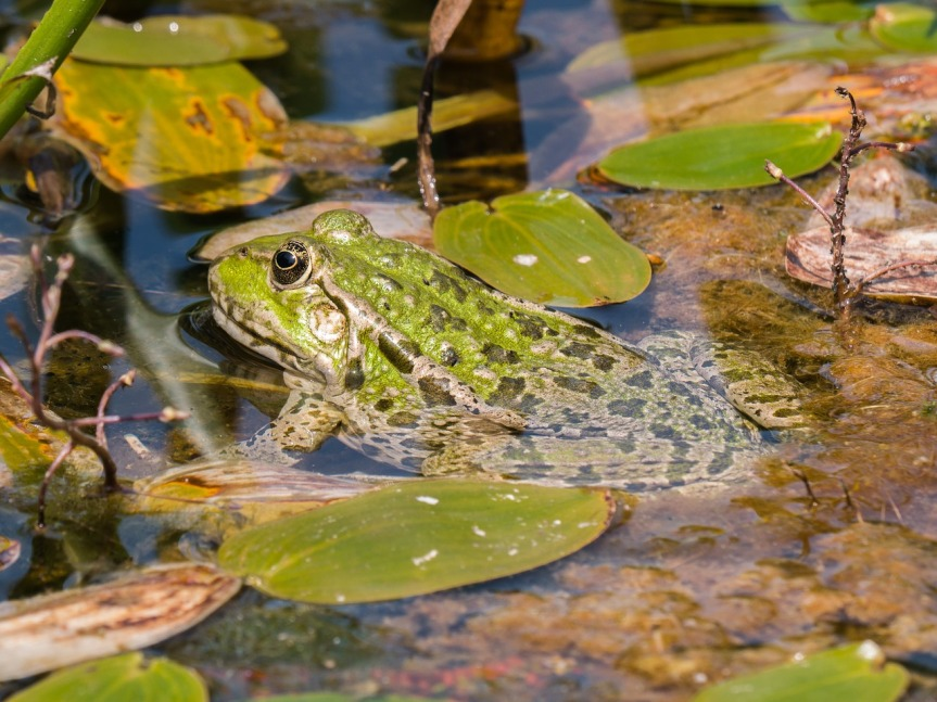 frog-3580574_1280
